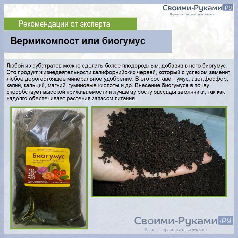 Земляника «Барон Солемахер»: выращивание из семян - подробная инструкция!